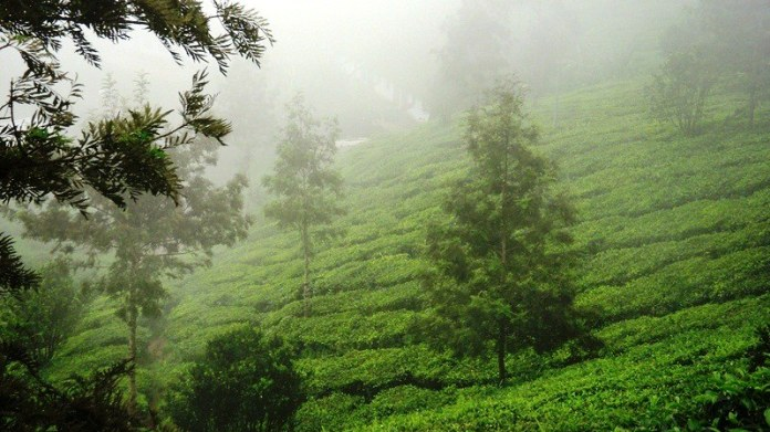 best places to visit in India during monsoon