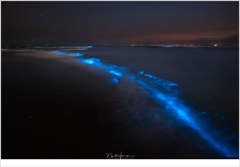 Zeevonk bij Katwijk aan Zee. In het donker is het moeilijk fotograferen omdat de zoeker gewoon te verblindend is. Misschien een euvel van alle elektronische zoekers?