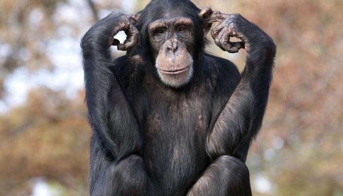 intelligent animals of the world