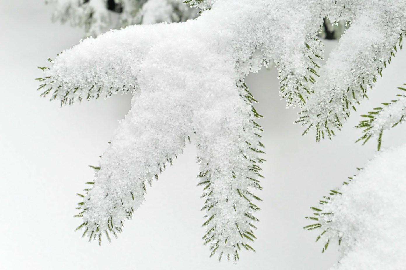 Bílá znamení čistoty