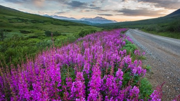 BEST SCENIC PLACES TO VISIT IN ALASKA