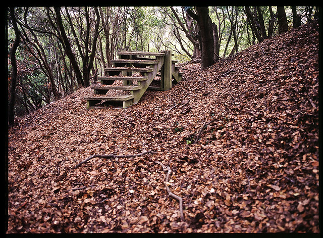 Image Result For Random Stairs In The Woods