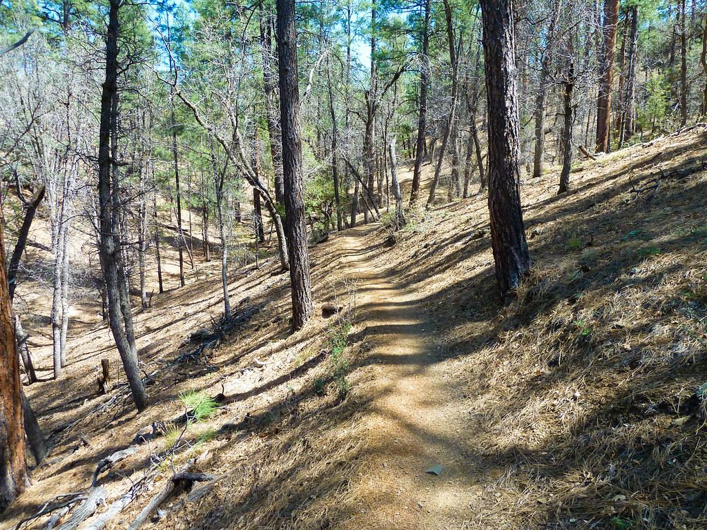 Lynx Lake: Homestead Trail #305