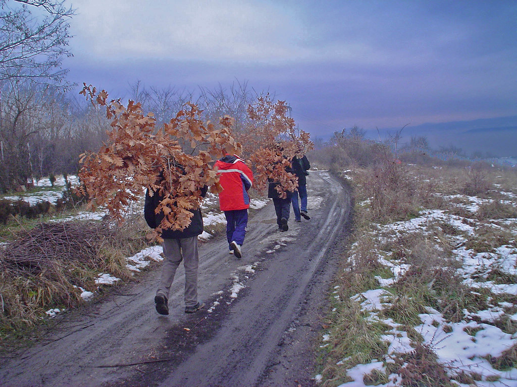 Badnjak Vracanje Iz Sece Badnjaka Stojan Ilic Flickr