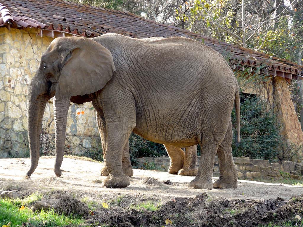 Mutant Elephant Taken At The Jackson MS Zoological Park