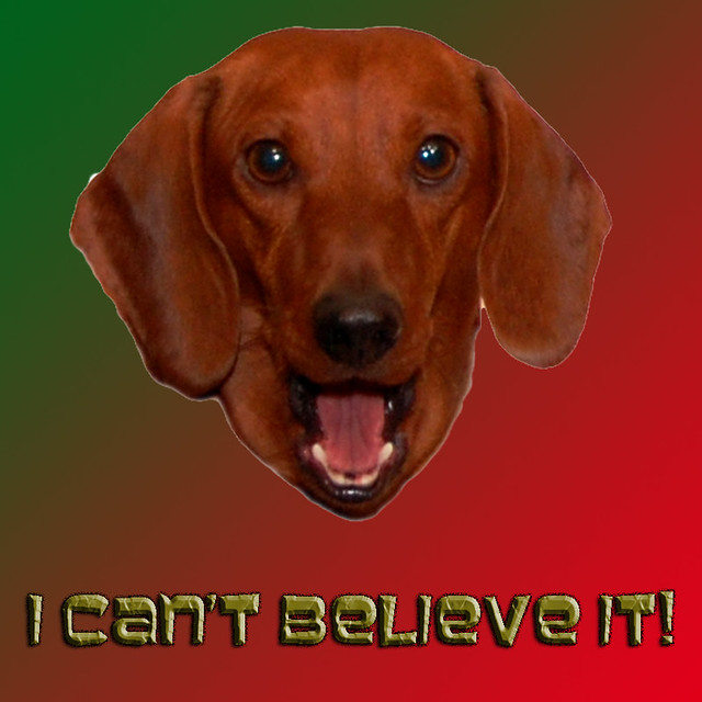 I Cant Believe It Charlie Brown The Weiner Dog Says
