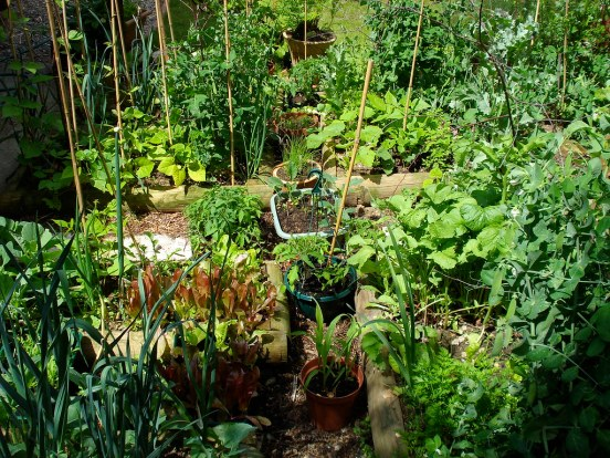 Image result for my vegetable patch flickr