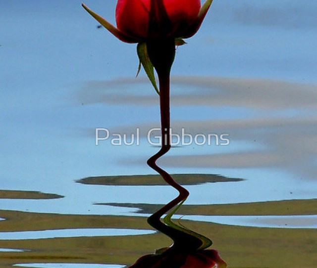 Reflection Of Perfection By Paul Gibbons