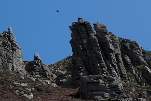 Kestrel Commedagh Castles Mourne Mountains Commedagh
