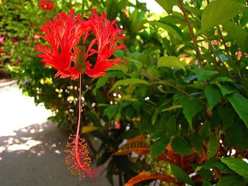 Flower Photography When The Beauty Of Flower Speaks