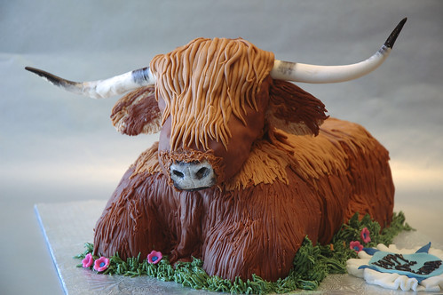 Highland Cow Flickr Photo Sharing