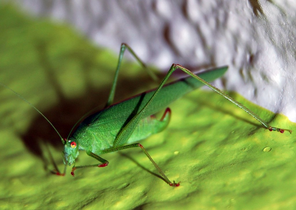 El Insecto Esperanza Nacho Flickr