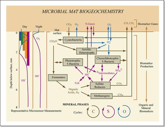 Microbial Mat Biogeochemistry | Microbial mat biogeochemistr… | Flickr