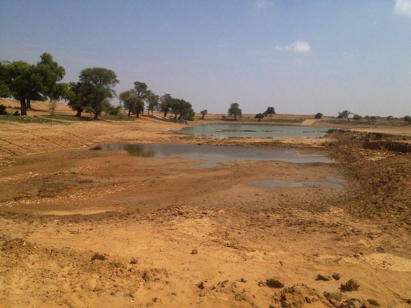 oasis in thar desert