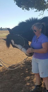 Remedial Equine Massage Therapist Sherri Davis of Equisynergy