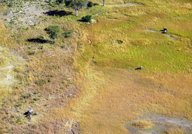 Okavango desde el aire