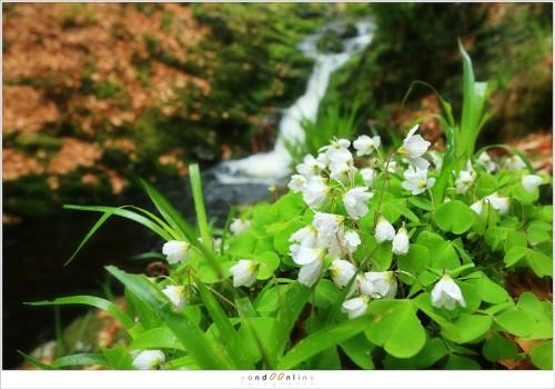 Bloemen in de omgeving. De waterval is herkenbaar maar eist geen onmiddellijke aandacht. (29mm - ISO100 - f/9 - t=1/30sec)
