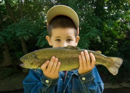 Image result for pan-fried mountain trout gif