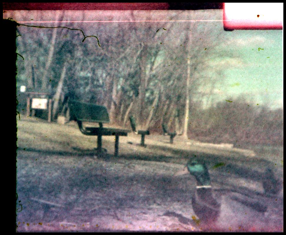 Ducky Daddles Woodland Lake Holga TFS 110 Camera