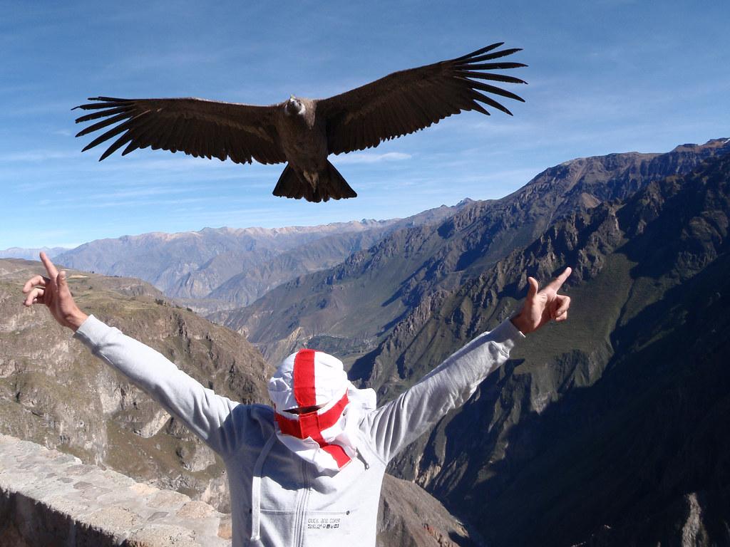 Condor Burka Andes Mountains Peru Quot Honestly Quot Explained