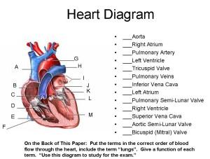 Heart Diagram | timothyakeller | Flickr