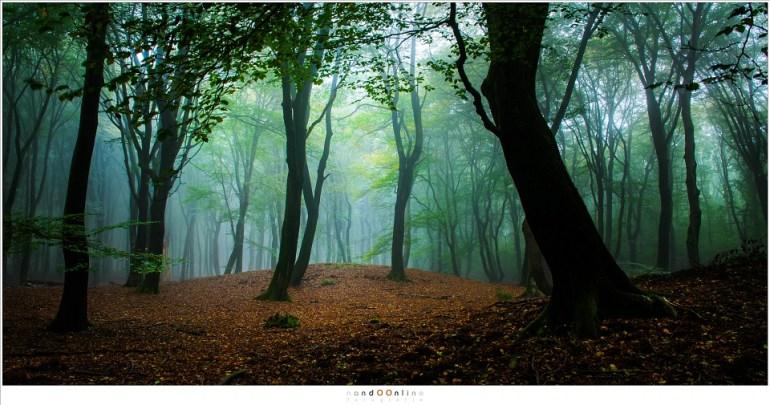 Een oude grafheuvel, nauwelijks herkenbaar. Het lijkt alsof de bomen het uit respect de ruimte laten. (16mm; ISO100; f/11; t=13sec)