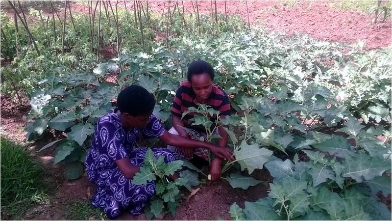 Elda Mmary(right) at work with a vegetable farmer (Photo credit: IITA/Gloriana Ndibalema)
