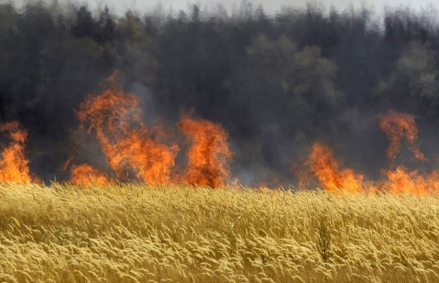 Hungary-Burns-Monsanto