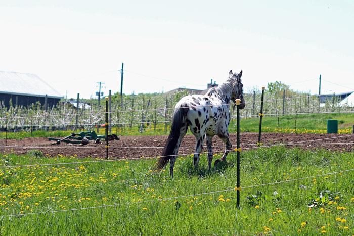 18_vergers-lafrance-chevaux