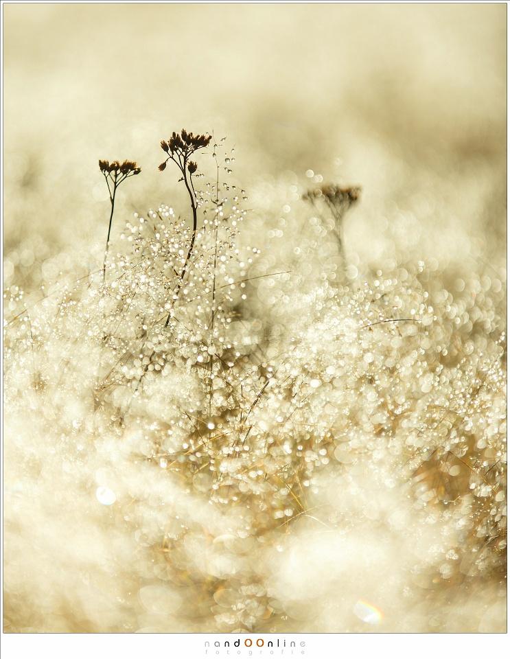 De eerste tekenen van winter op de strabrechtse heide