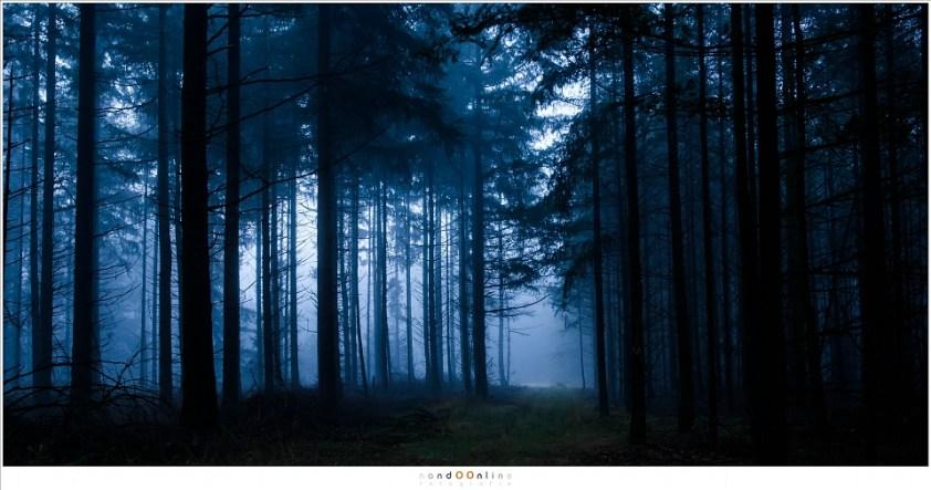 Herfst impressies. Ochtendschemering op de Stippelberg; het moment dat de mystiek van een geheimzinnig woud nog aanwezig is. (24mm (equiv FF: 36mm ); ISO200; f/5,6; t=30sec)