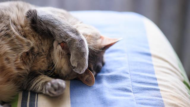 Sleeping Cat - Paw Eye Mask