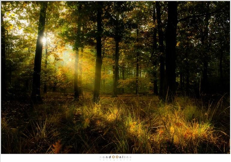 Het zonlicht dringt door het donkere bos en verlicht zo kleine eilandjes van begroeiiing (16mm (equiv FF: 24mm) ISO1100; f/8; t=1/125sec; -1EV)