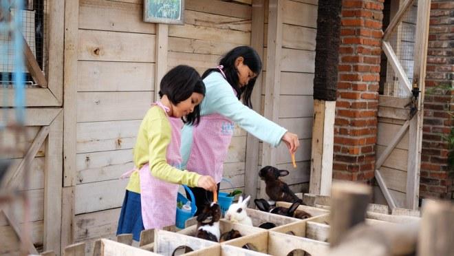 Hasil gambar untuk gambar Lactasari Mini Farm di Bandung