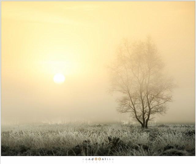 zonsopkomst, mist, strabrechtse heide, nandoonline, nando