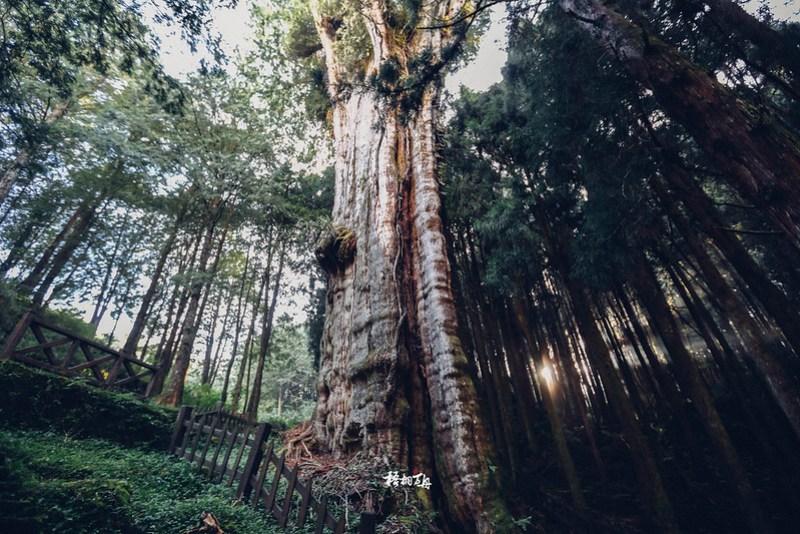 9|水山鐵道秘境深處的巨木光影魔術