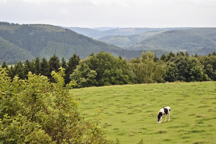 4 Things to do in the Eifel Region