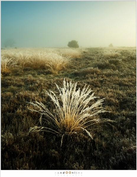 mist, nando, nandoonline, strabrechtse heide,
