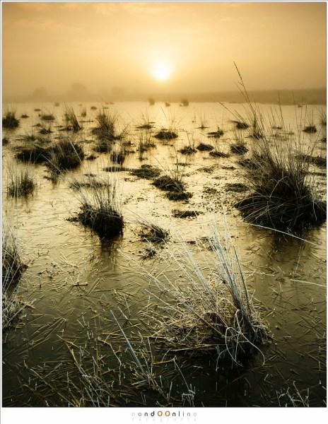 strabrechtse heide, nandoonline, nando, zonsopkomst, mist