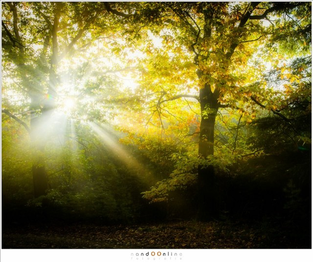 Een stralenkrans tussen de bomen, waar de herfstbladeren gloeien in het licht van de ochtendzon (24mm (equiv FF: 36mm); ISO560; f/7,1; t=1/125sec; -0,6EV)