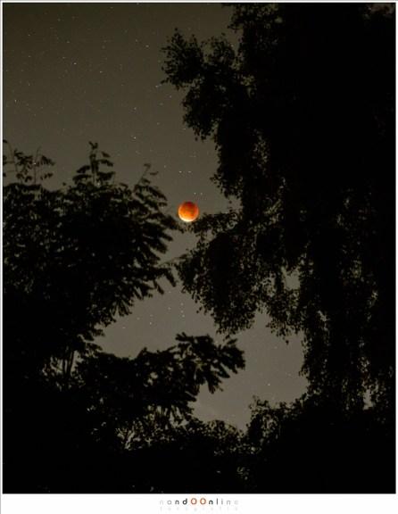 Een volledig verduisterde Maan tussen de bomen (IS03200 - f/4,5 - 8sec met brandpunt 100mm voor de omgeving en sterren, en een kortere belichtingstijd voor de Maan zelf)