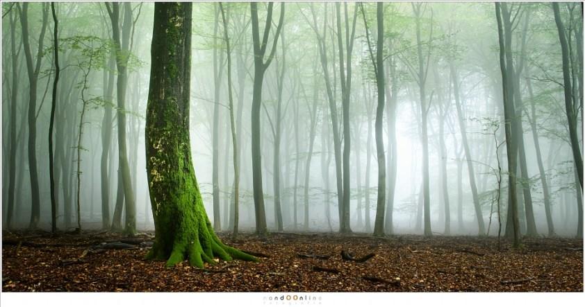Herfst in het Speulderbos. De mist is aanwezig, maar altijd op respectabele afstand. Hoe ver je ook naar de mist loopt, ze blijft voor je uit vluchten (22mm; ISO100; f/11; t=5sec)