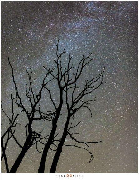 De Melkweg met de Andromeda nevel half verborgen achter de boomstam (ISO3200 - f/2,0 - 15sec - 35mm brandpunt)