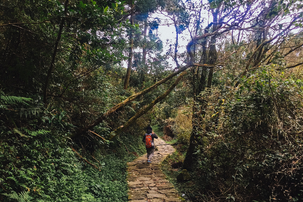 Yangmingshan is one of the best areas to stay in Taipei for those who want to be in touch with nature