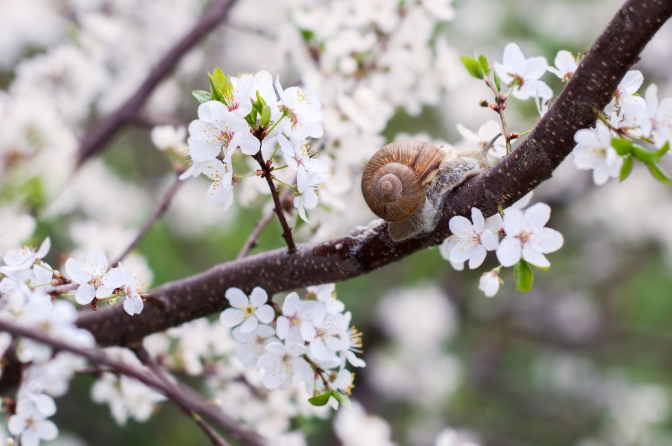 Milimilimilimilimetrs no pavasara.. 12.05.2013