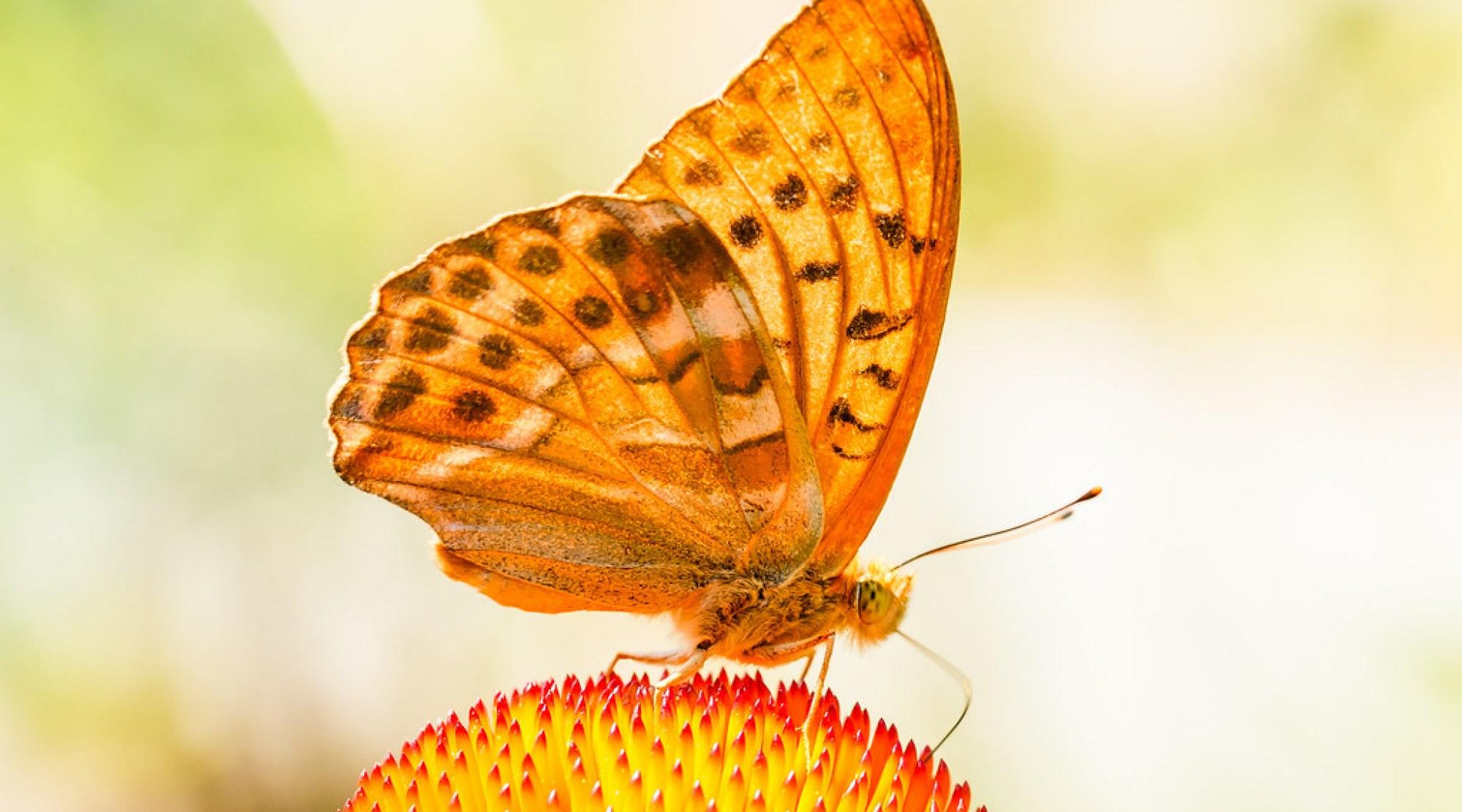 Schmetterling 119
