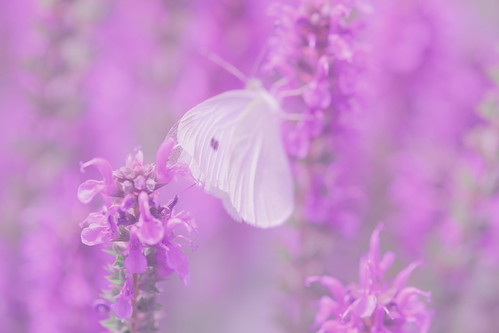 Butterfly Dreams Flickr Photo Sharing