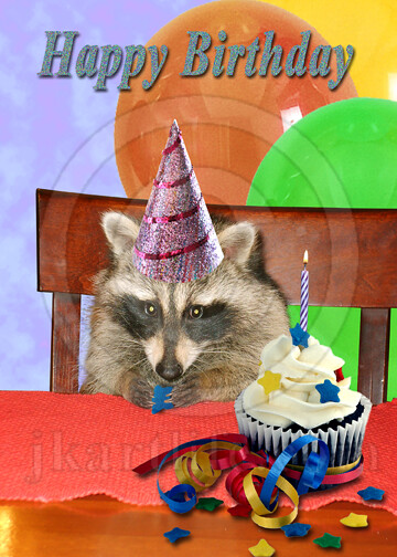 Raccoon Birthday 899672 To Purchase Or See A Wider Selecti Flickr