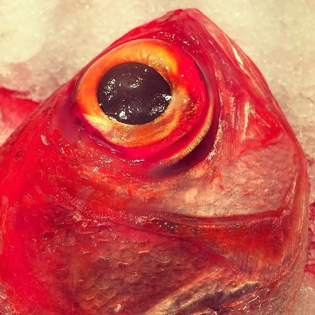 Ojos lechosos no son signo de pescado fresco