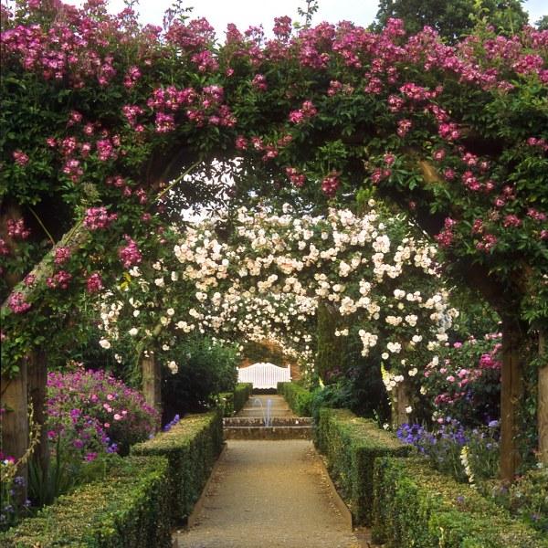 rose garden Mottisfont Abbey Rose Garden, Hampshire, UK | An outstandi